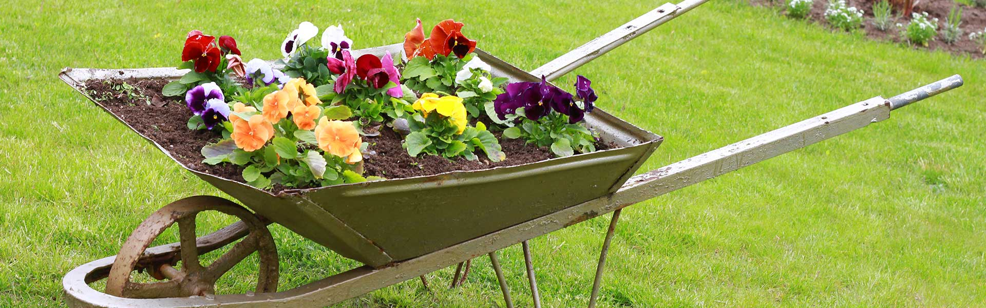 We are here to help you grow the best-looking garden ever!!